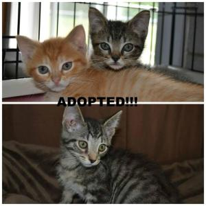 Adopted Squiggles & Lenny and Arizona