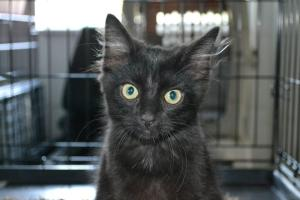 MAC the mysterious has been neutered, is up to date on shots and would love to inhabit your home!