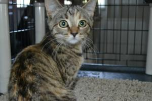 Sabrina the Sweet has been spayed, is up to date on shots ane ready to make  your life SWEET!