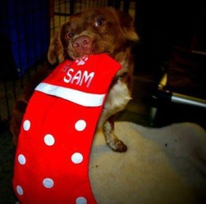 sam with stocking