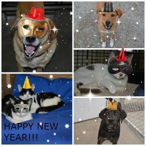 1-1-15 new year