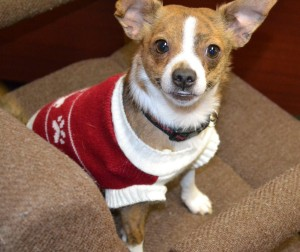 buddy 1 in sweater