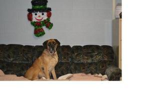 sugga the office dog