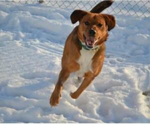 1-6-snow dog 1