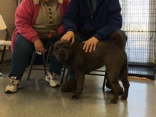 4-23 Paisley adopted