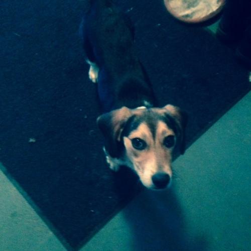 beagle found 2-22