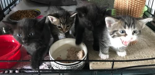 FOUR LITTLE KITTENS APRIL 21